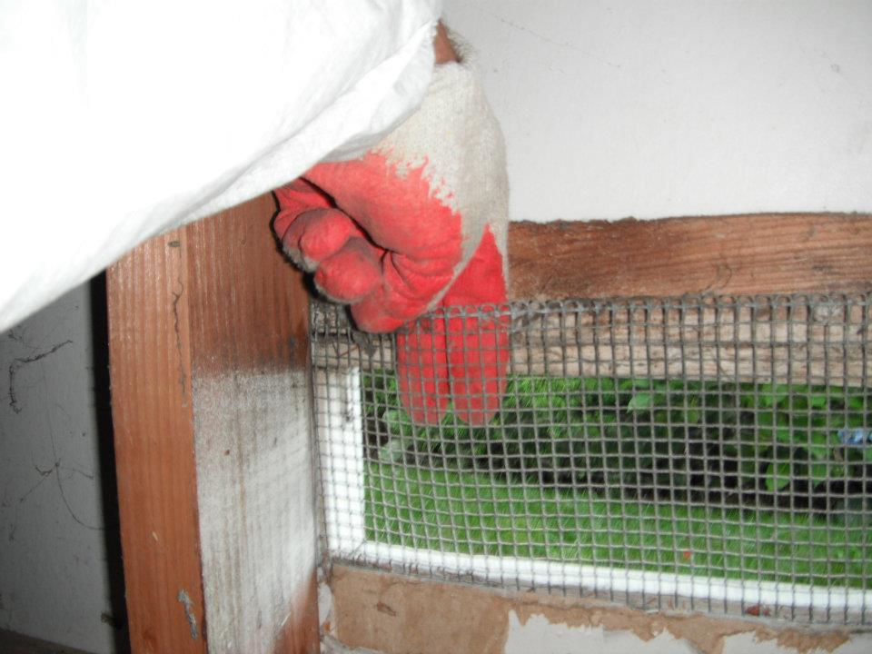 Rodent Control Company   Rodent Proofing & Removal